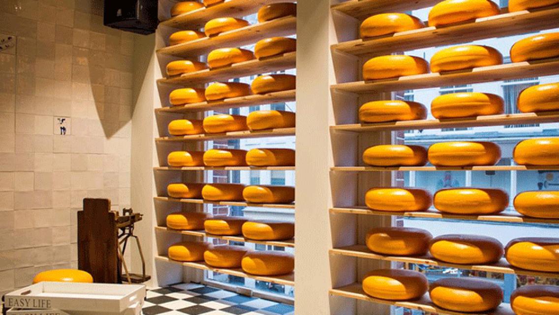 네덜란드 치즈 테이스팅 투어
