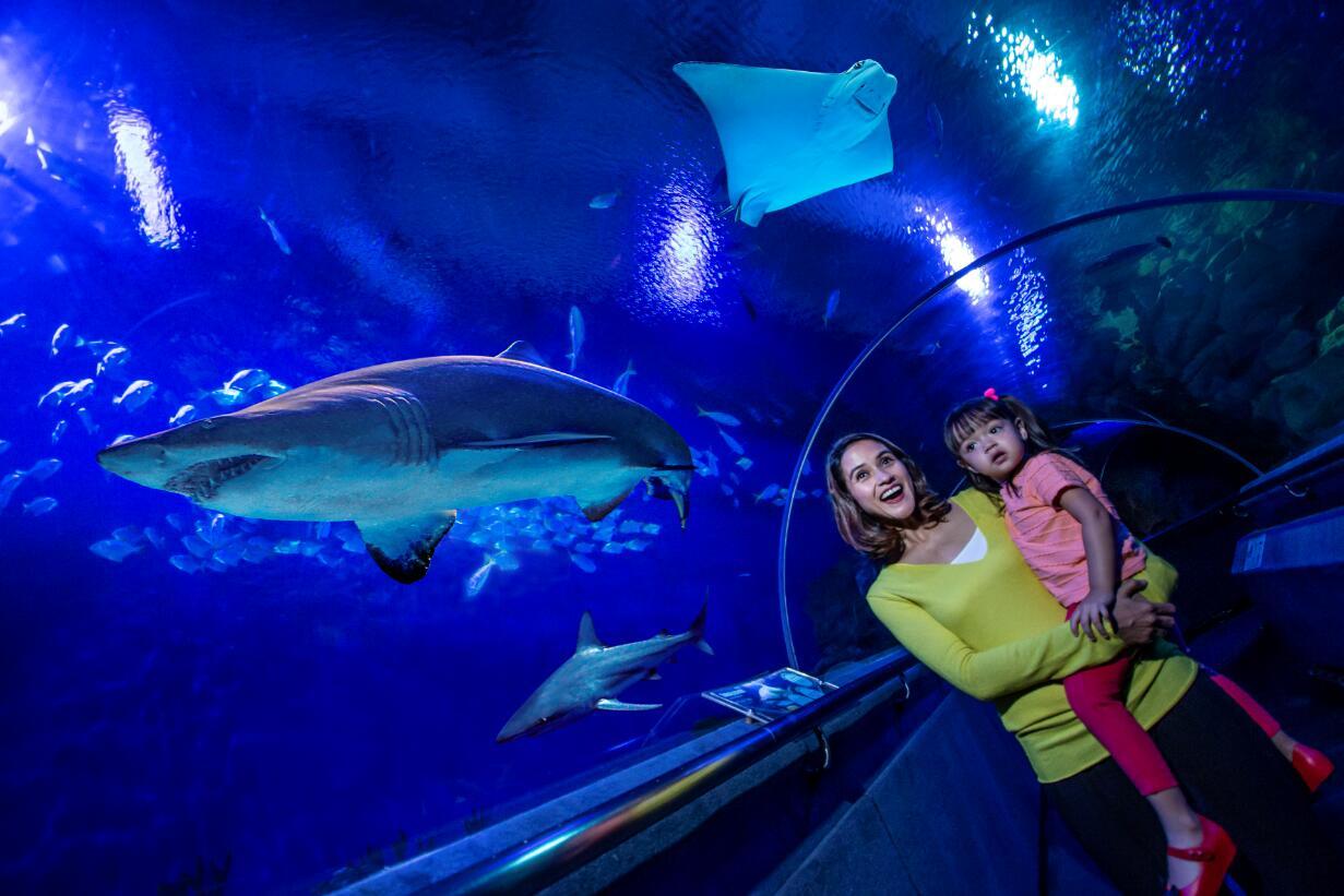 超值特惠 | 吉隆坡城中城水族館門票(無需指定日期使用)