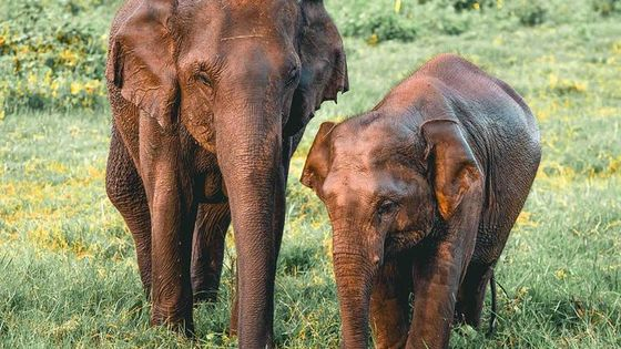 Evening Safari in Kaudulla National Park from Colombo