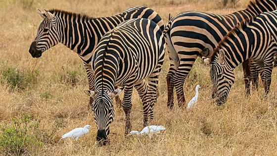 Private Game Safari Nairobi national park/Elephant Orphanage/Giraffe Centre