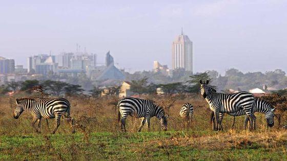 Half Day Nairobi National Park Tour PARK FEES INCLUSIVE From Nairobi