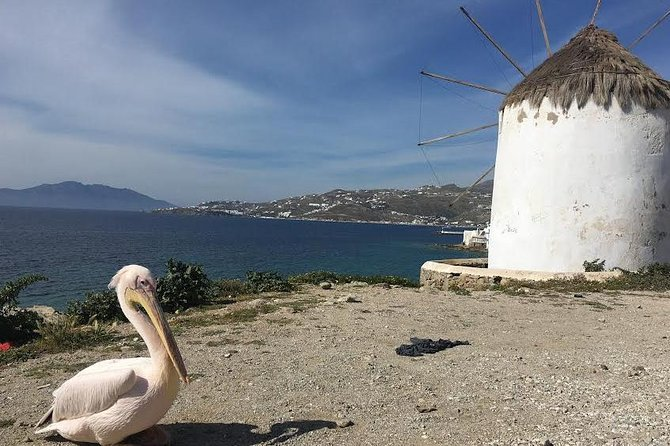 Private Tour: Mykonos Island in Half a Day