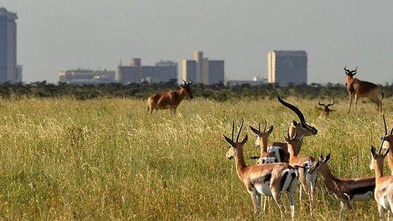Giraffe Centre, Elephant Orphanage & Nairobi National Park Day Tour