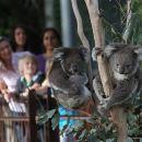 Australian Wildlife Tour at Melbourne Zoo Ticket