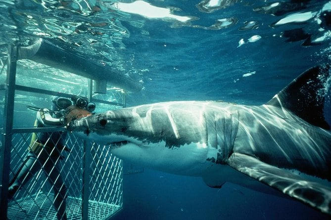 Shark Diving Full Day Guided Private Transfer to Gansbaai from Cape Town
