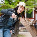 京都+嵐山+金閣寺+奈良公園一日遊(京都世界遺產巡禮+奈良小鹿)