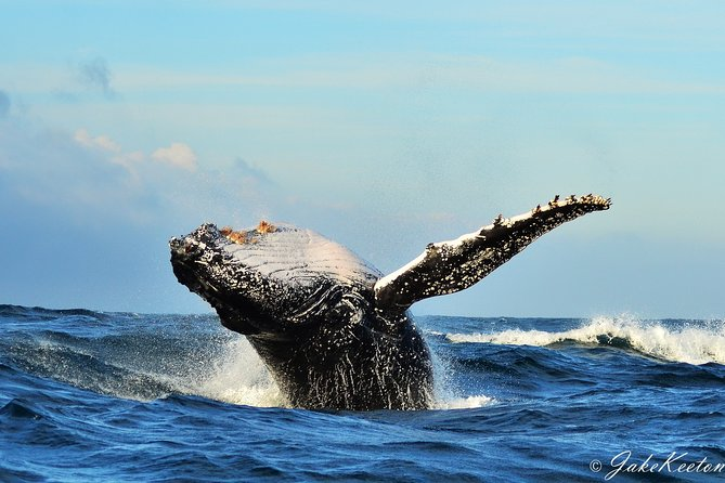 Whale, Dolphin & Penguin Island Cruise