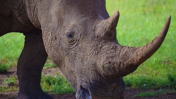 Nairobi National Park, David Sheldrick, Giraffe Centre, Karen Blixen Museum