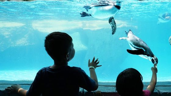 Skip the Line: Ski Dubai Penguin Experience Ticket