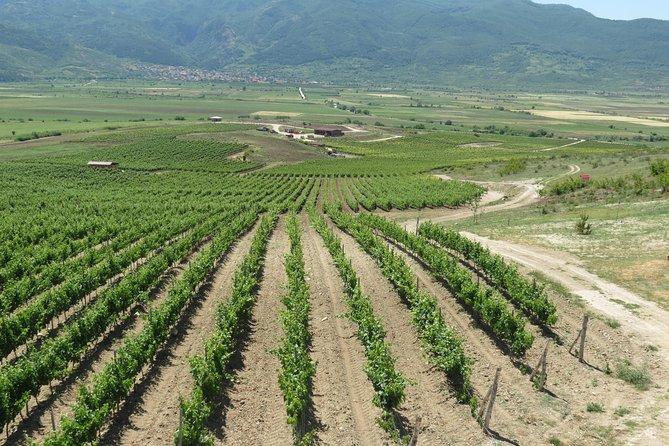 Wine Tasting in Villa Yustina
