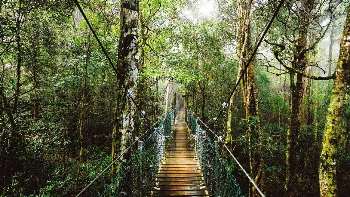 브리즈번 골드코스트 근교여행 오렐리 레밍턴 국립공원 및 알파카 농장