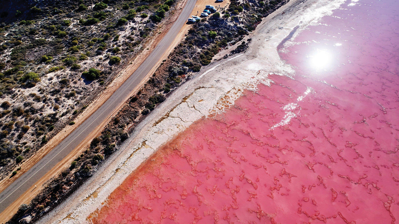 珀斯私人包車4日遊 - 浪漫粉紅湖+品澳洲龍蝦+喂野生海豚+世界之窗(中文司導講解)
