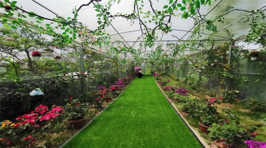 Jinhai Snow Mountain · Four season flower valley