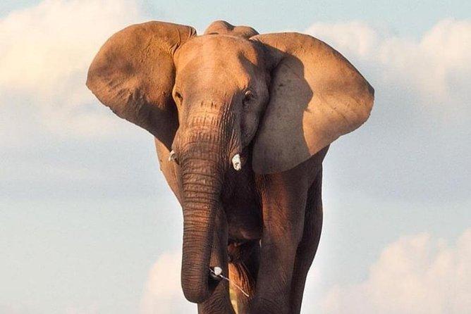 Big 5 Wildlife Conservation