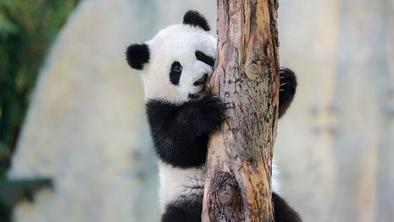 Shanghai Wild Animal Park Ticket