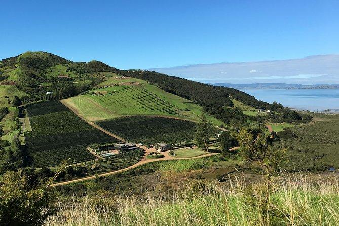Waiheke Island Vineyards and Bush Walk