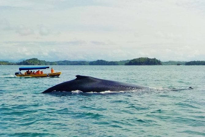 Whale Watching (July 15 to October 15), and Island Tour in the Gulf of Chiriqui