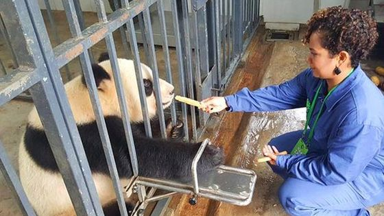 Private Volunteer Program At Dujiangyan Panda Rescue Center For A Day Including Lunch