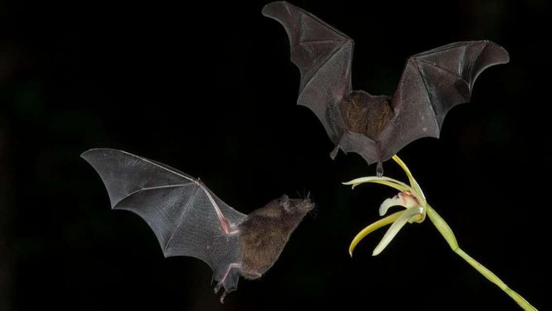 Skip the Line: Monteverde Bat Jungle Admission Ticket