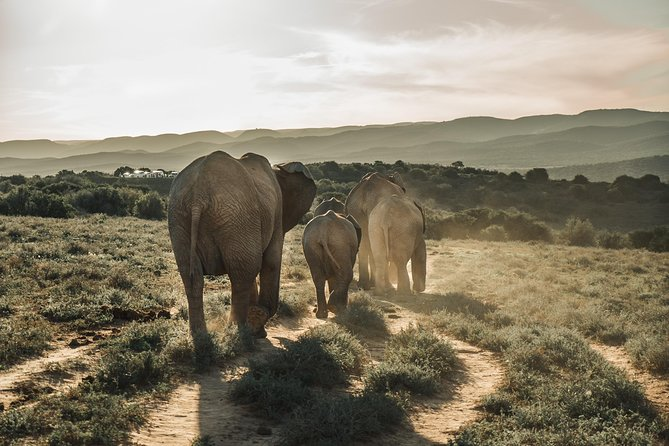 Addo Elephant National Park Full-Day Tour from Port Elizabeth