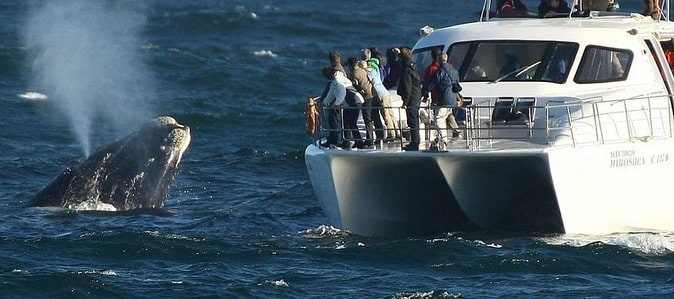 Hermanus Whale Watching Full Day Tour