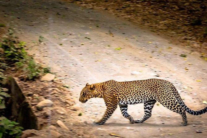5 Days Serengeti and Ngorongoro Luxury Lodge Safari