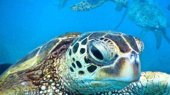 2-Hour Xpress Snorkel from Ka'anapali Beach