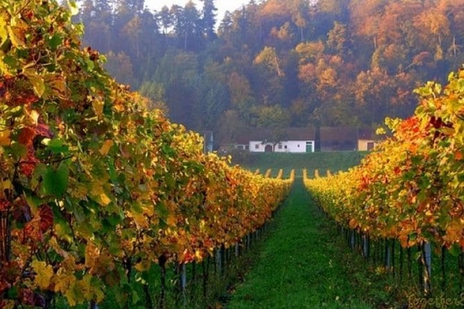 Private Wine and History Tour to Villany and Pecs from Budapest with winetasting