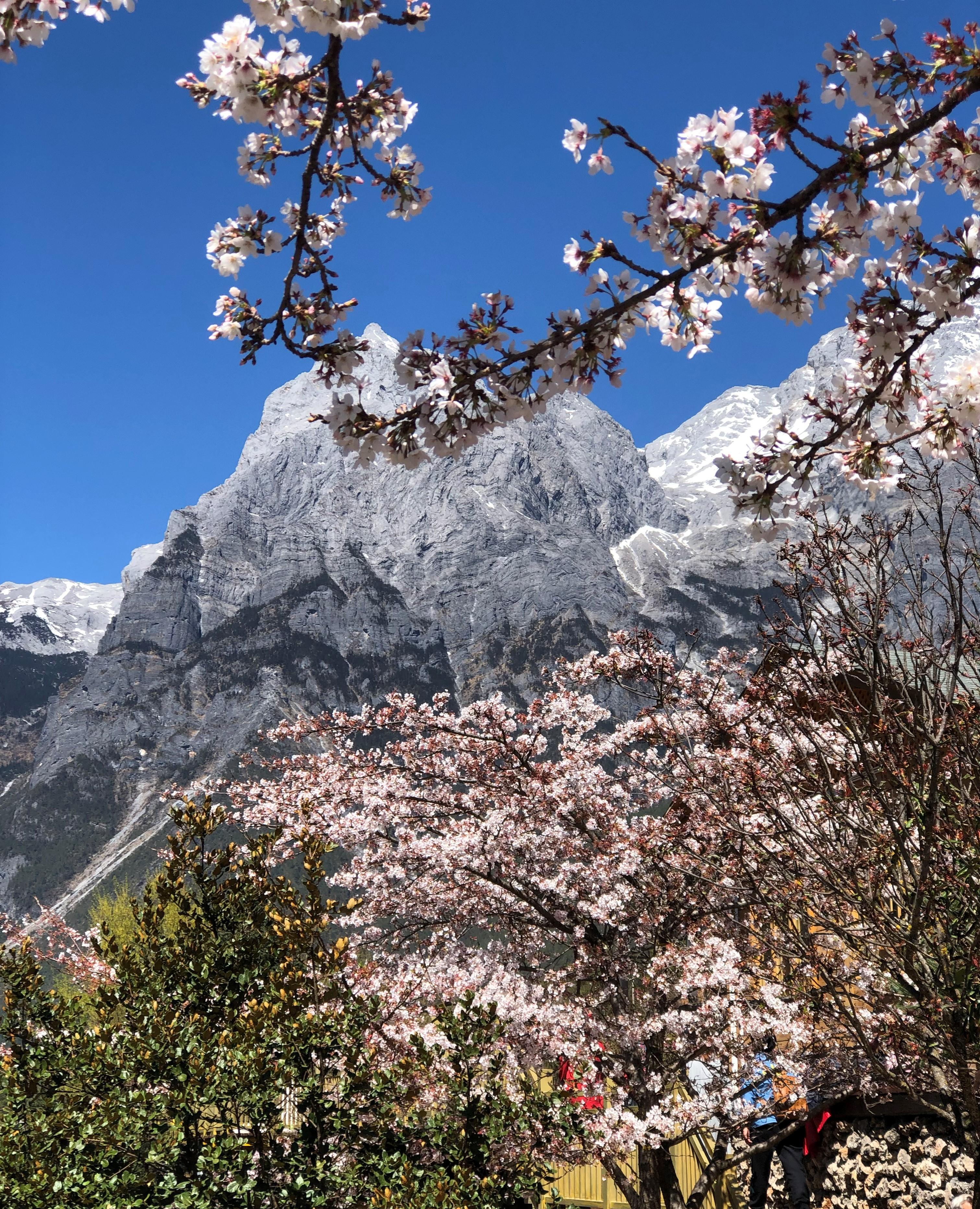 Lijiang Yulong Snow Mountain One Day Tour [Glacier Park & Blue Moon Valley & Impression Lijiang Show & Yushui Village]