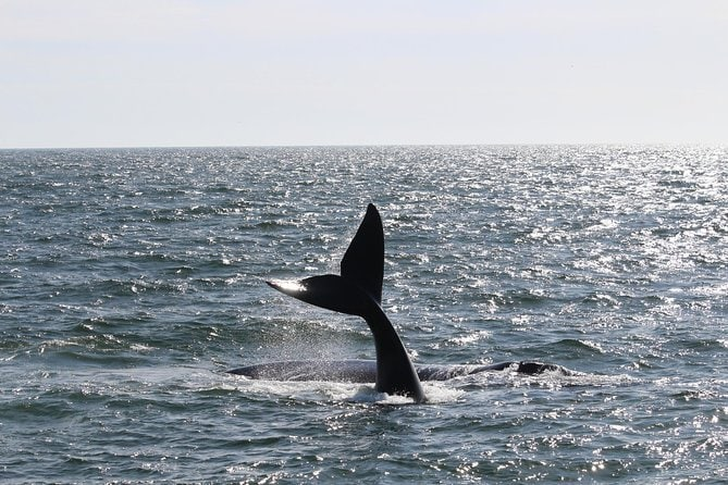 Whales and Wine Private Day Tour (Seasonal)