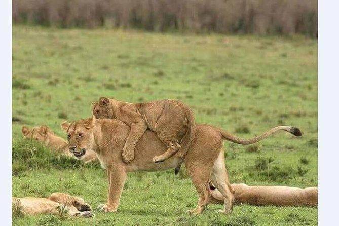4 Days Safari Lake Manyara – Serengeti Park– Ngorogoro Crater