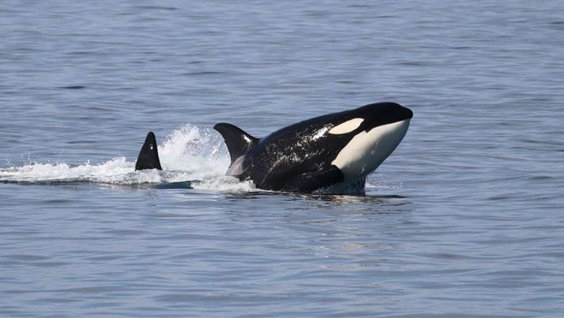 Anacortes Guaranteed Whale Watch Tour