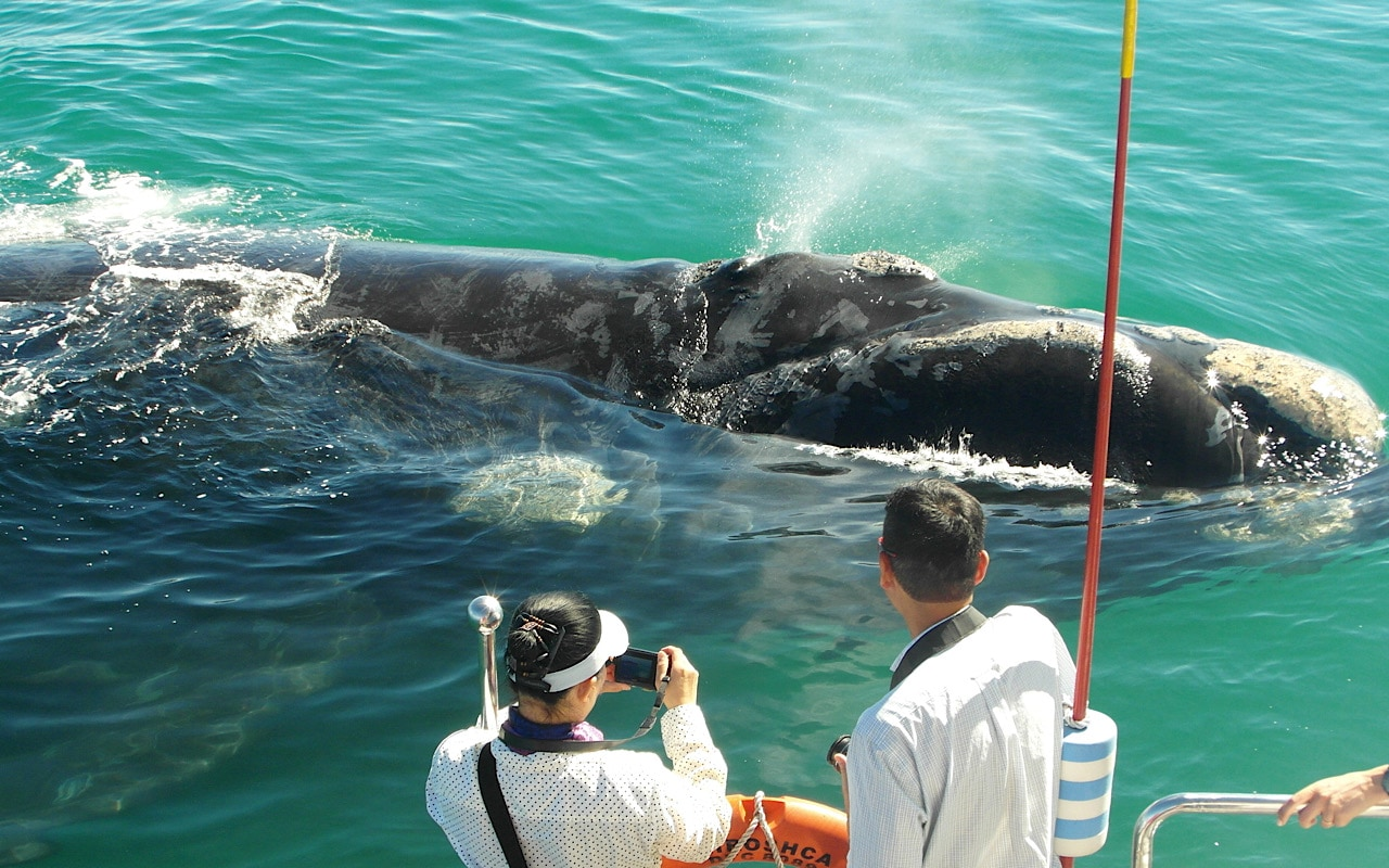 Hermanus Whale Watching Boat Trip and Wine Tasting Private One Day Tour