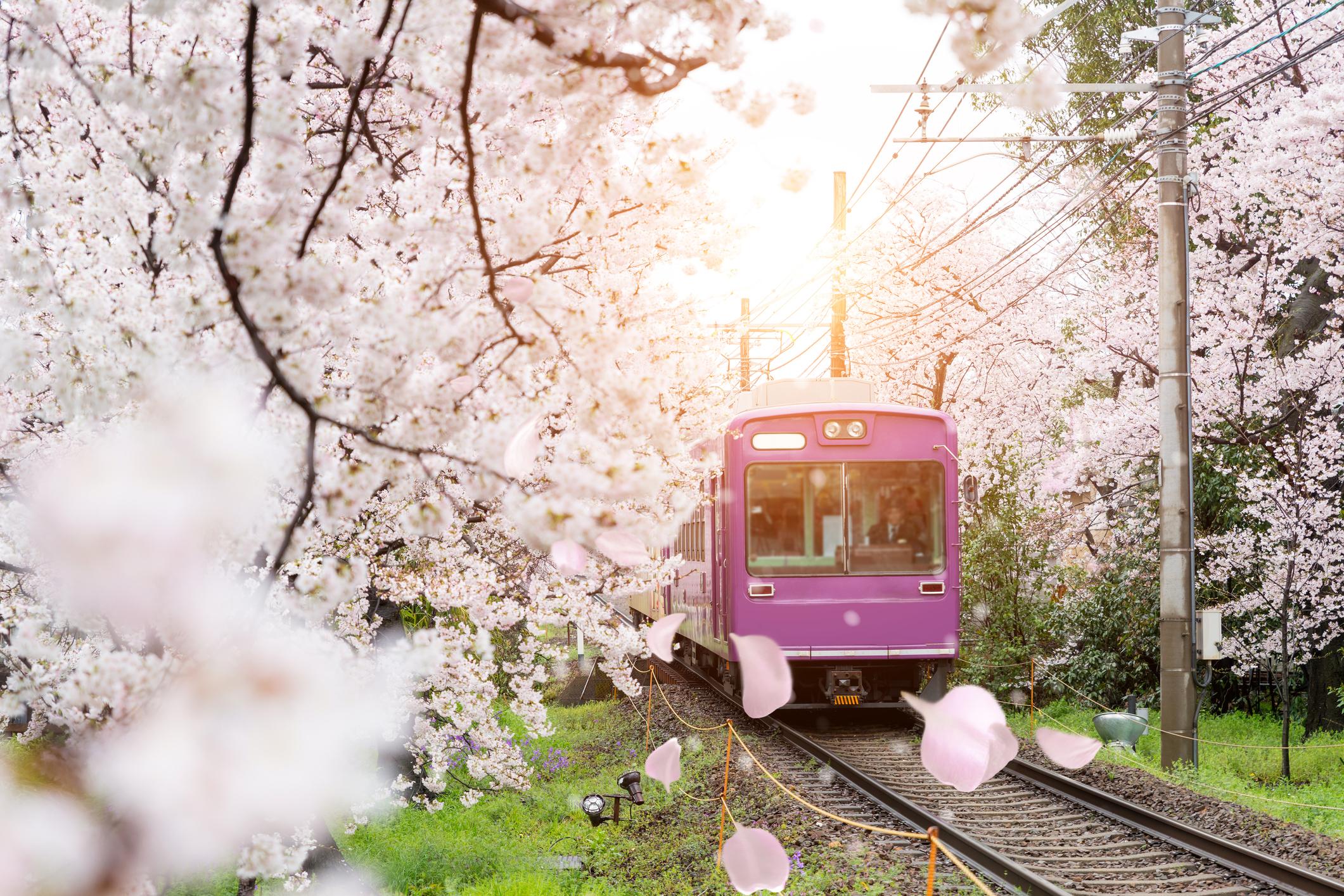京都+嵐山+奈良公園一日遊(體驗嵐山電車)
