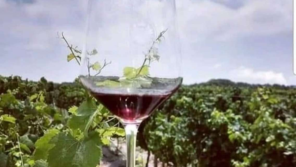 The Mdina & Maltese Wine Tasting Experience 4hrs Tour