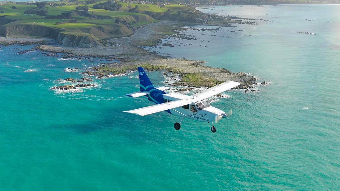 新西蘭南島 凱庫拉觀光飛機30分鐘觀鯨觀海豚之旅(含全程講解+多個班次可選)