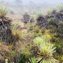 Hiking Adventure to Chingaza Paramo—Moorlands from Bogota