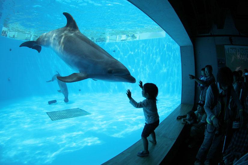 九十九島水族館 チケット