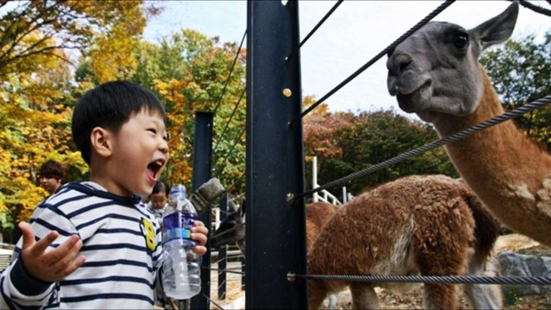 Seoul Grand Park Zoo Admission Ticket