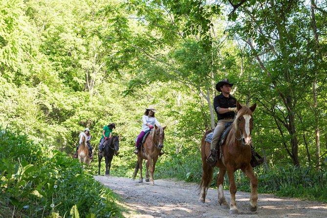 札幌郊外での乗馬体験(専用車による送迎付き)