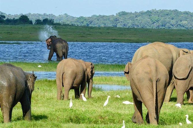 Day tour to Minneriya National Park,Sigiriya & Dambulla from Kandy