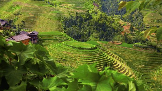 Full-Day Bus Tour: Longji Rice Terraces and Local Minority Villages