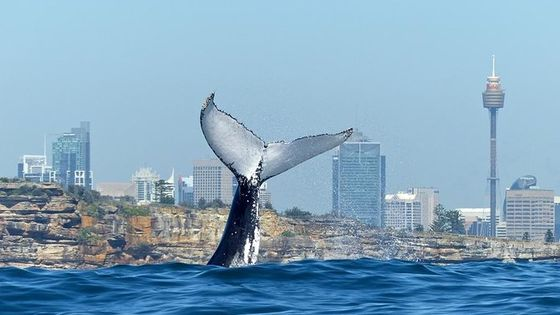Small-Group Luxury Sydney Whale Watching Cruise