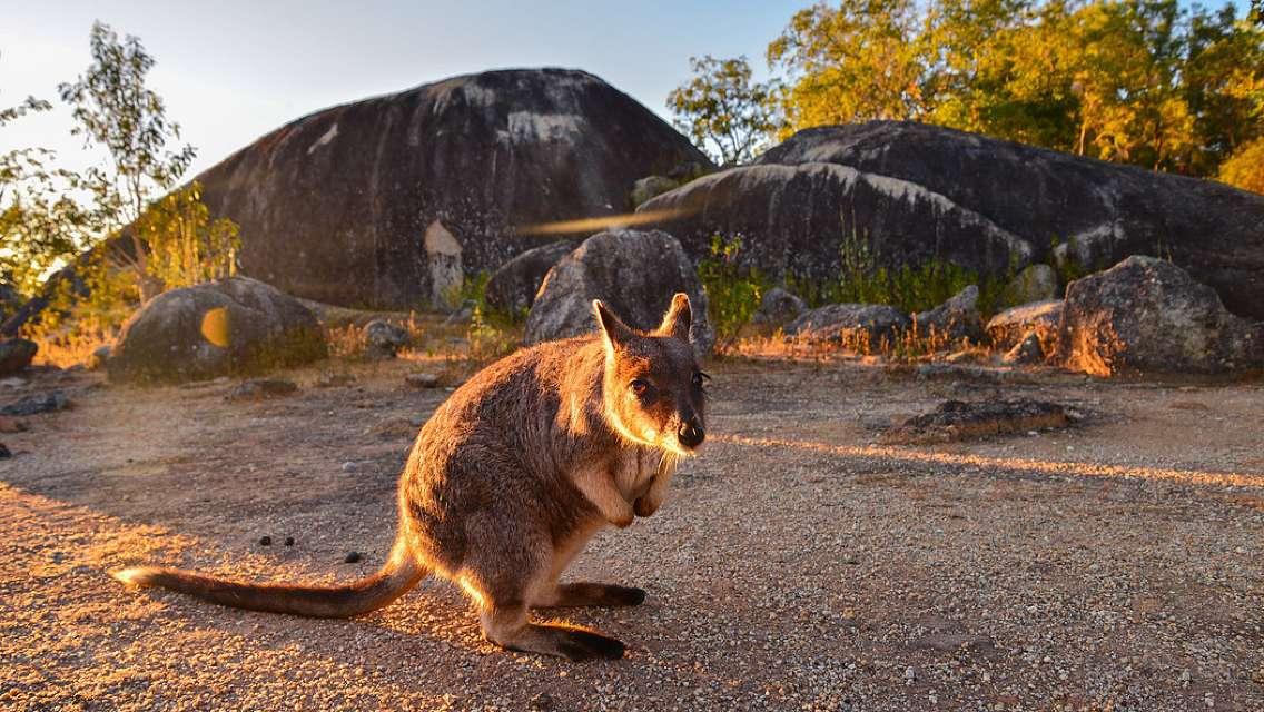 凱恩斯澳洲珍稀動物鴨嘴獸+喂袋鼠+網紅甜品店+奇幻水晶博物館一日遊(中文司導)
