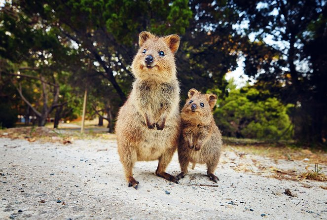 Rottnest Island All-Inclusive Grand Island Tour from Fremantle