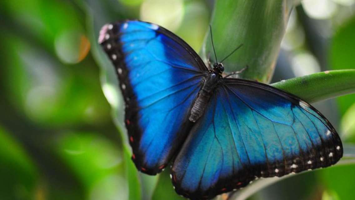Butterfly Garden Tour in Monteverde