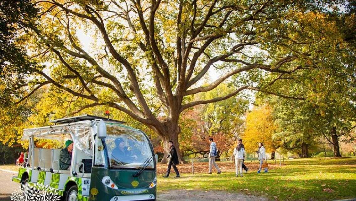 The Explorer - Melbourne Gardens