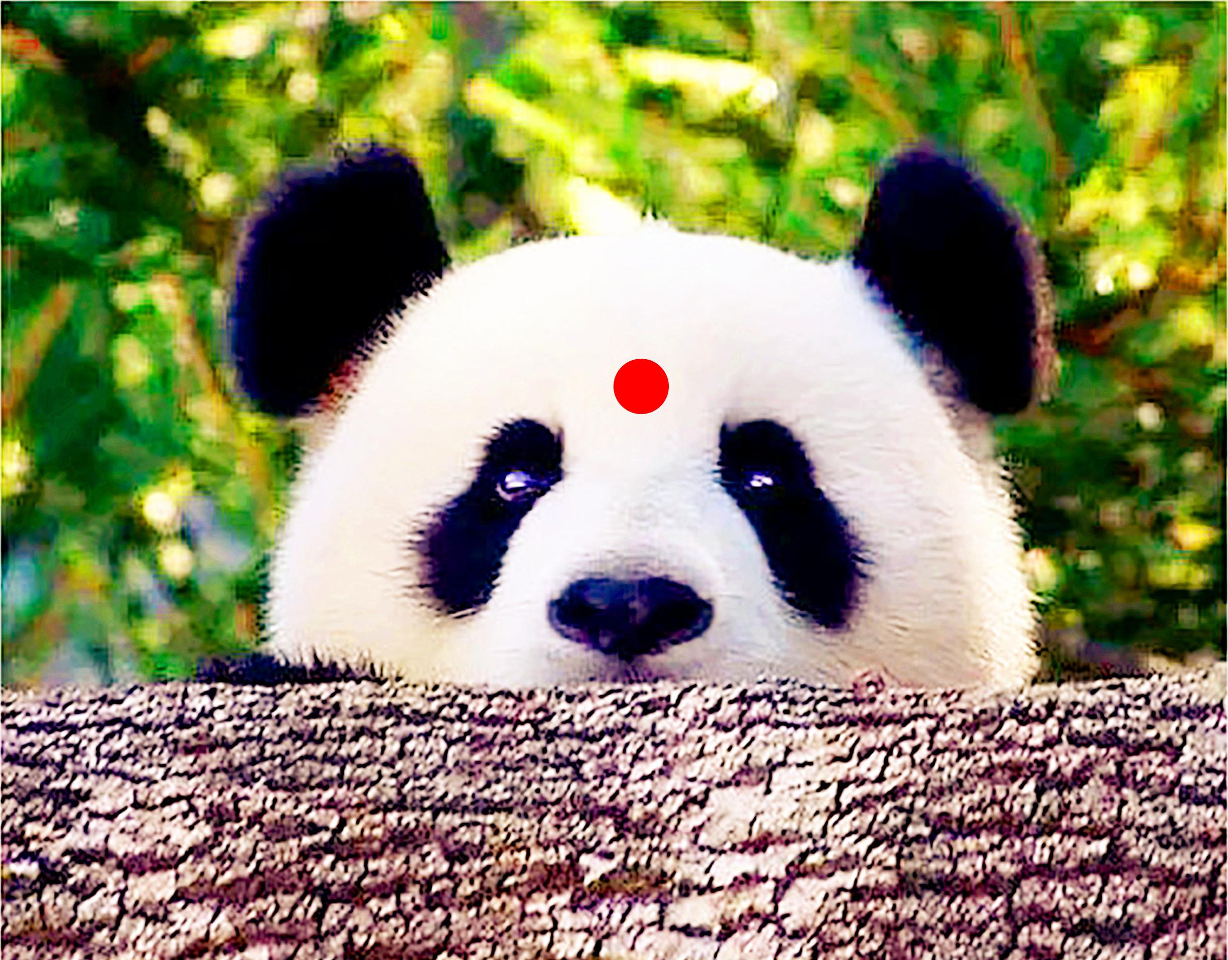 成都大熊貓繁育研究基地+都江堰景區一日遊(8點小團+全景行程+知名川劇+當地特色餐)