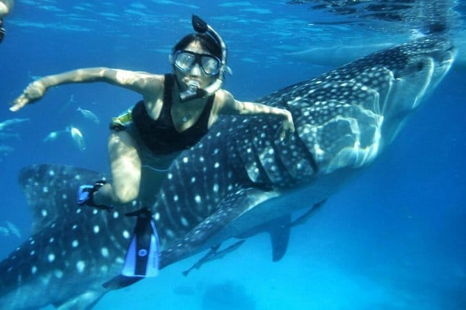 Private Vehicle to Oslob Cebu Whale Shark Experience