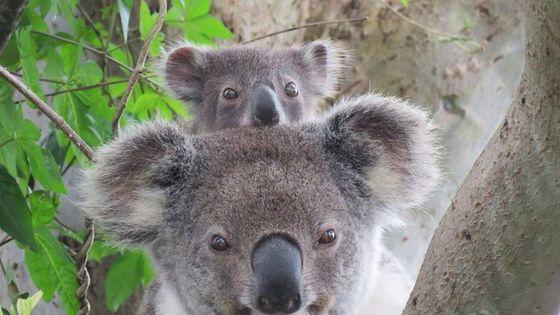 Byron Bay Wildlife Safari